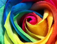 petalos-de-color2